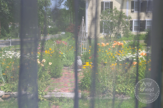 Garden through lace curtains